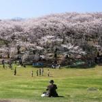 花盛りの根岸森林公園
