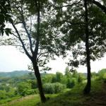 鎌倉の緑地を歩く 台峯~鎌倉中央公園