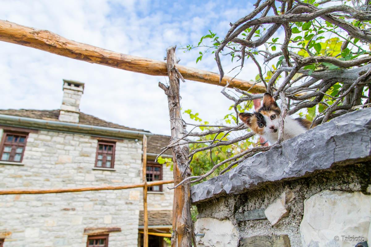 ギリシャのネコとチビオトと